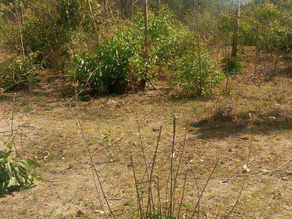 Farm Land for Sale in Dasua, Hoshiarpur - 15 Acre