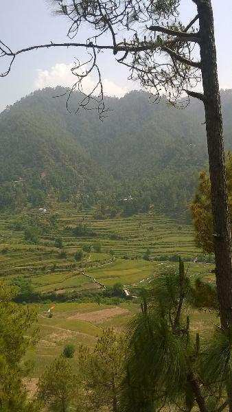 Agricultural/Farm Land for Sale in Almora - 1520 Acre