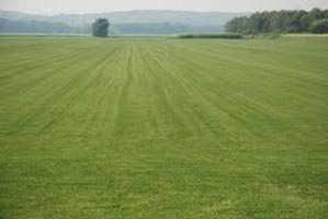 100  Sq. Yards Residential Land / Plot for Sale in Loni, Ghaziabad - 100  Sq. Yards