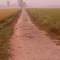 20 Acre Farm Land for Sale in Patiala
