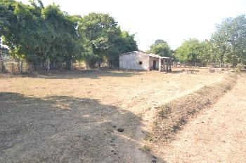 11 Ares Farm Land for Sale in manpur Umaria