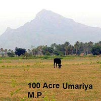 100 Ares Farm Land for Sale in Chandia, Umaria