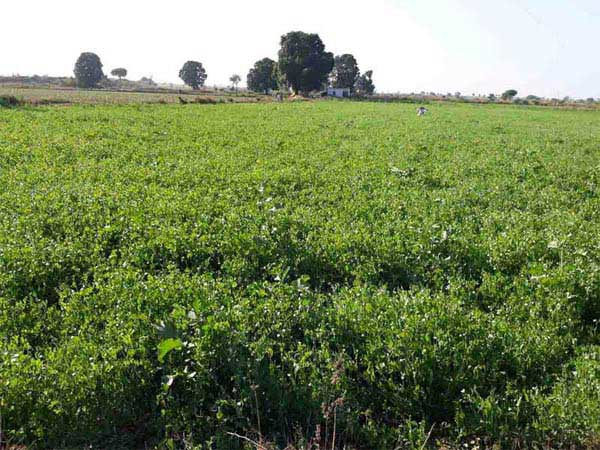 Agricultural/Farm Land for Sale in Damoh - 25 Acre