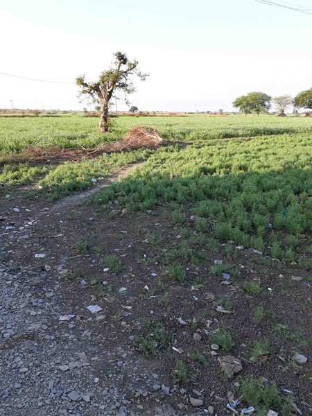 Agricultural/Farm Land for Sale in Damoh - 32 Acre