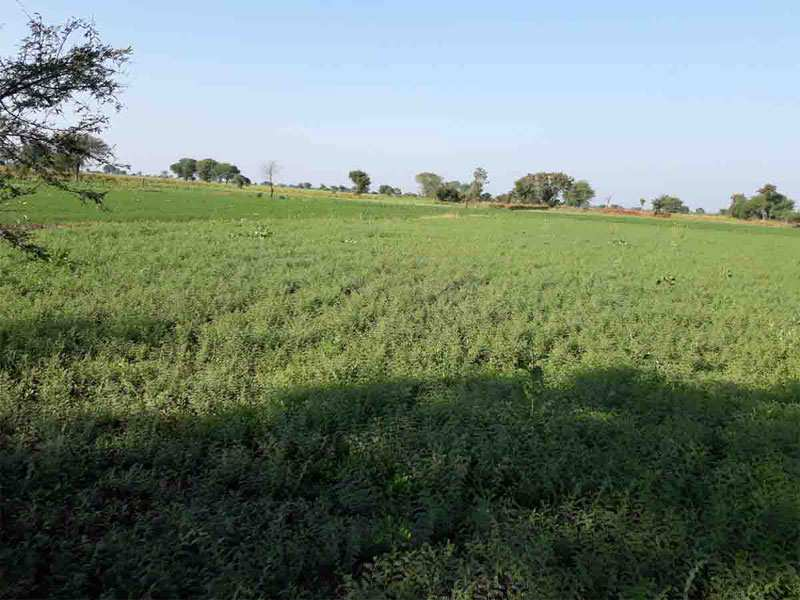 Agricultural/Farm Land for Sale in Damoh - 40 Acre