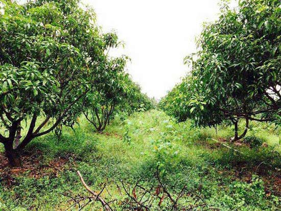 Farm Land for Sale in Karur - 100 Acre