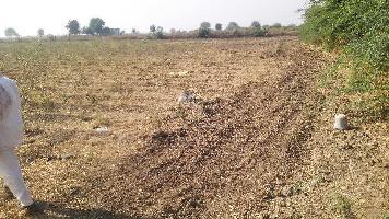 14 Bigha Farm Land for Sale in Nainwa, Bundi
