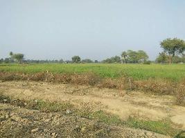21 Bigha Farm Land for Sale in Nainwa