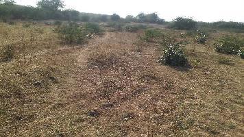 12 Bigha Farm Land for Sale in Lakheri