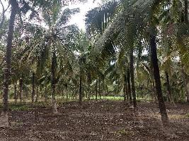 1 Ares Farm Land for Sale in Kozhinjampara, Palakkad