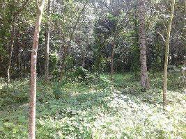 25 Cent Farm Land for Sale in Palai, Kottayam