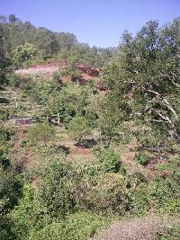 6 Bigha Farm Land for Sale in Morni Hills