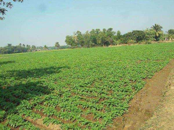 Commercial Lands /Inst. Land for Sale in Bardhaman - 72000 Sq. Feet