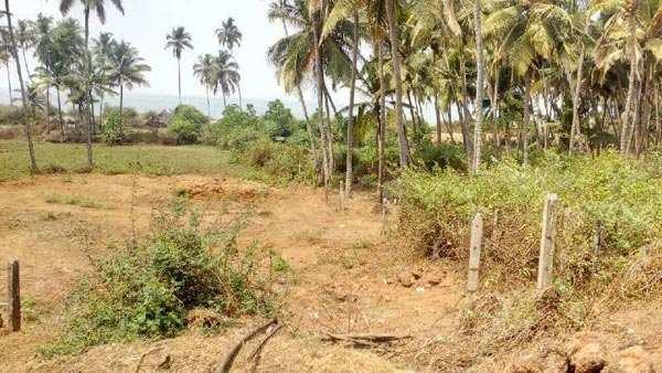 Agricultural/Farm Land for Sale in Vengurla, Sindhudurg - 4 Acre