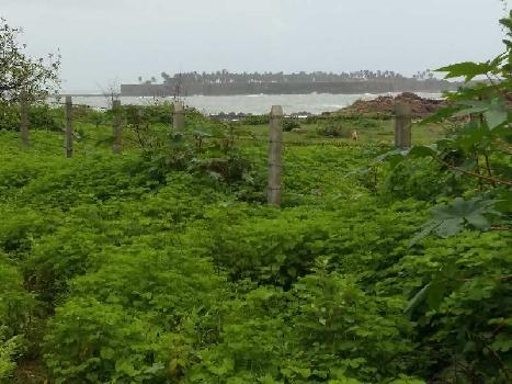 100 Guntha Farm Land for Sale in Malvan, Sindhudurg