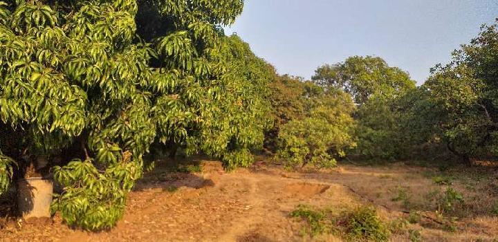 22 Acre Farm Land for Sale in Sawantwadi, Sindhudurg