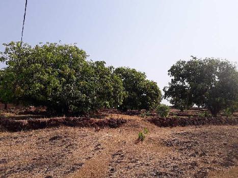 2 BHK 4 Acre Farm House for Sale in Devgad, Sindhudurg